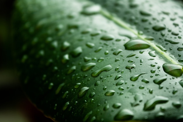 Macro shot of the green leaf covered in water droplets