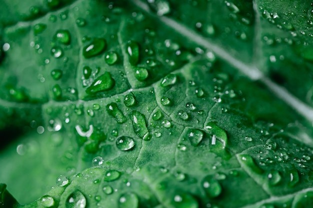 Macro shot of kale salad with water drops. organic detox diet. superfood. natural background