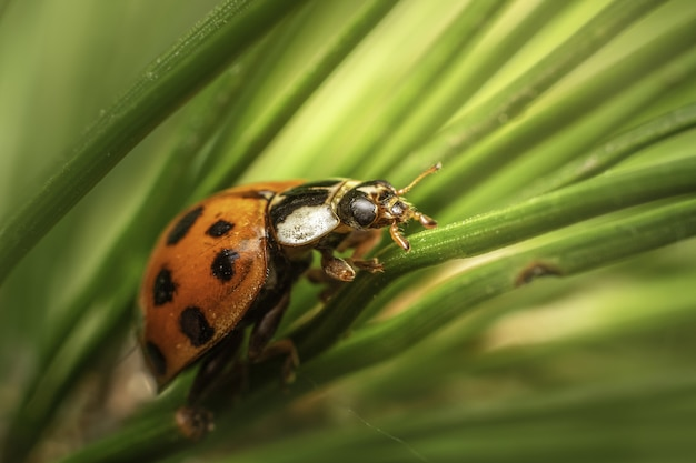 Macro shot of ladybug on green leaves