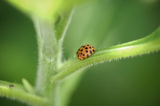 Macro shot of a ladybug on a green stem of a plant
