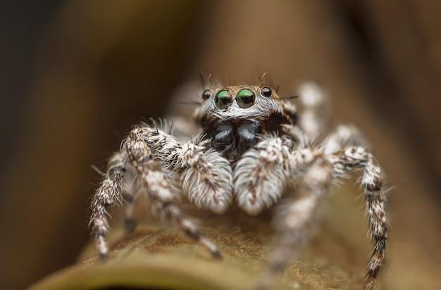 Макросъемка красивого паука