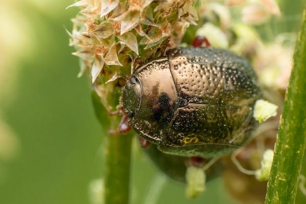 녹색 식물에 딱정벌레의 매크로 샷