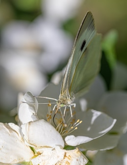Макросъемка бабочки на цветке
