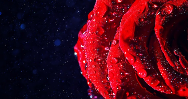 Макросъемка лепестка цветка с вкраплениями и каплями воды. текстура листа и лепестка на фоне размытых брызг.