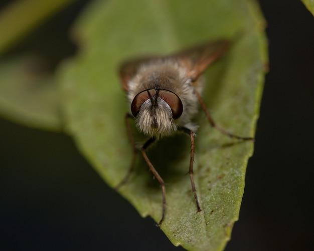 흐린 배경 조명 아래 잎에 나방의 매크로 촬영