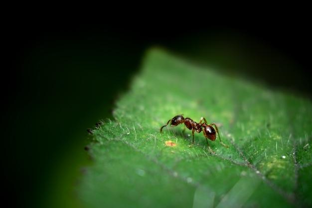 葉に赤いアリのマクロ撮影