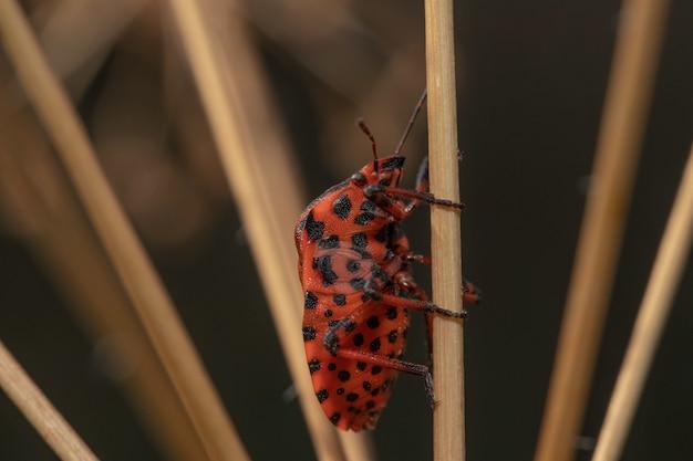 植物に黒い点がある赤い虫のマクロ撮影