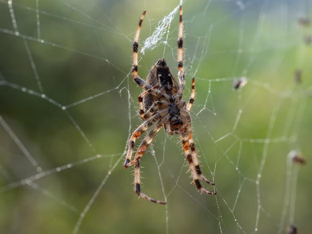 웹에 거미의 매크로 샷