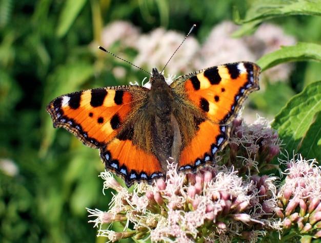 꽃에 주황색 나비의 매크로 촬영