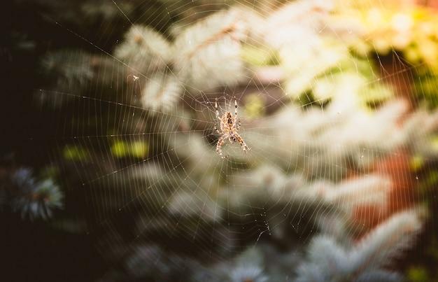 森の大きな巣の上に座っている大きなクモのマクロ撮影