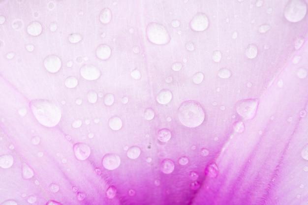 ピンクの花の背景にドロップのマクロ撮影