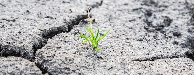 침식된 땅에 가장 이른 머리의 매크로 샷입니다. 생태 개념입니다. 마른 땅에 떠오르는 새싹. 금이 간 지구에서 자라는 녹색 식물. 새로운 삶. 지구 온난화의 개념입니다.