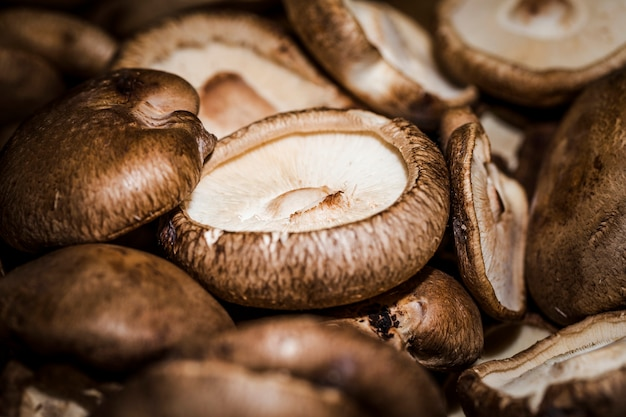 Макрос выстрел из свежих грибов