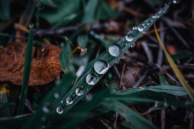 水滴が付いている緑の草のマクロ撮影