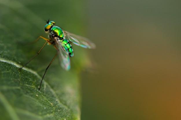 緑の家のマクロショットは、森林の中で飛ぶ
