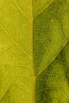 その主な静脈を示す緑の葉のマクロ撮影