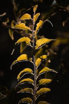 暗い背景に緑の葉のマクロ撮影