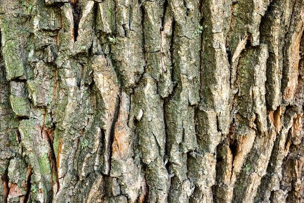 Макро-снимок текстуры коры дуба можно использовать для естественного фона