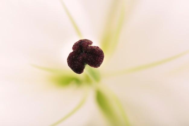 Макросъемка пыльцы