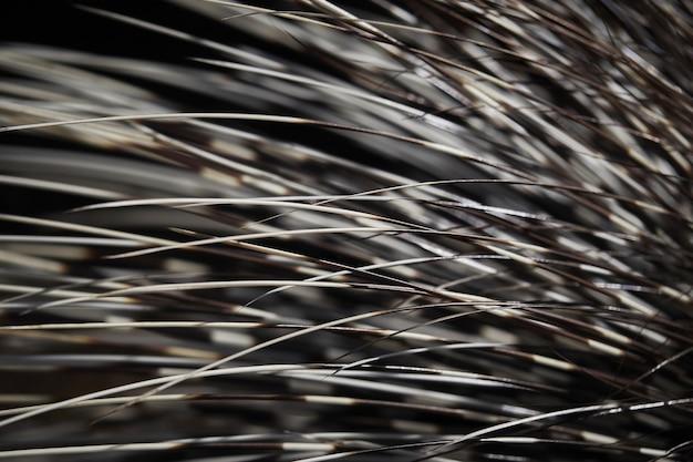 ヤマアラシの棘のマクロ撮影