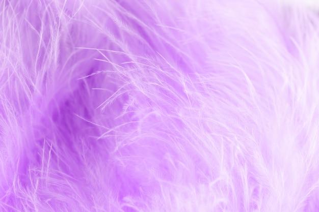 柔らかいぼかしスタイルで紫の鳥のふわふわの羽のマクロ撮影