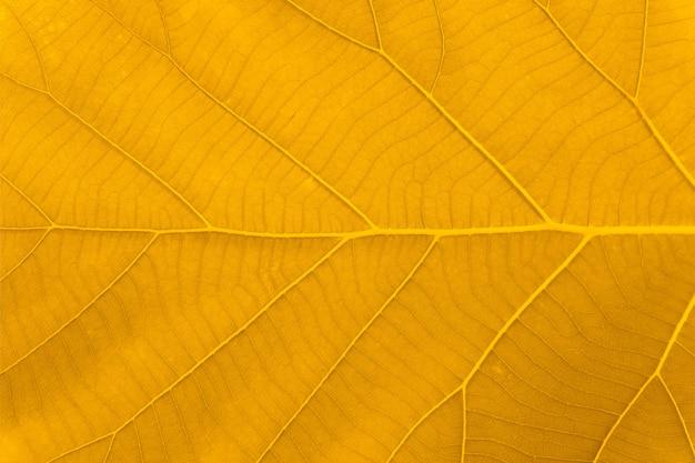 Macro shot. othumn leaf texture.