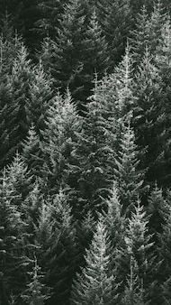 Macro shot of pine forest