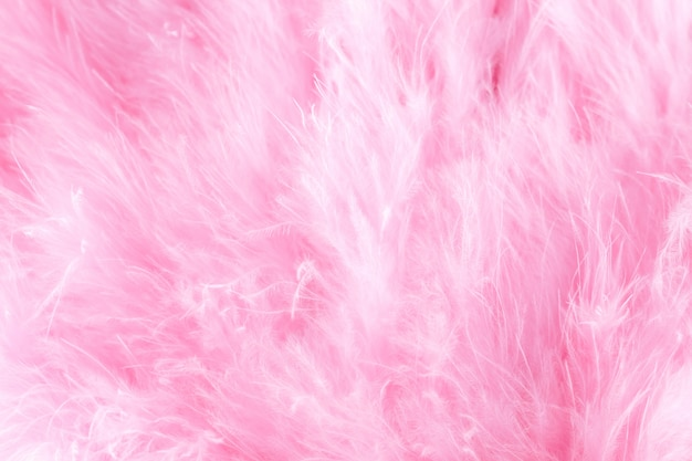 Macro shot of pink bird fluffy feathers in soft and blur style