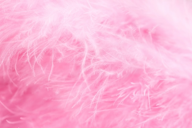 Macro shot of pink bird fluffy feathers in soft and blur style Premium Photo