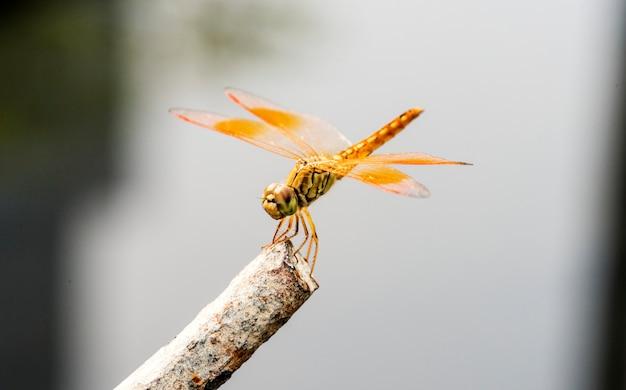 Macro shot of real dragonfly outdoors
