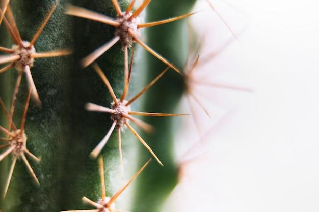 Colpo a macroistruzione di un cactus appuntito