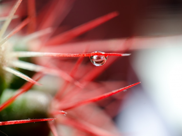 Macro shot of a tiny drop of water on a needle of a cactus