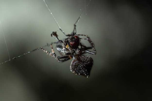 Macro spider on spider web