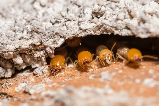 Macro termites are walking on the logs.