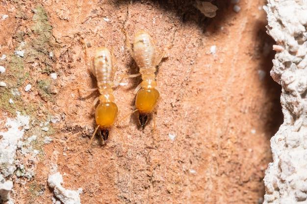 Macro termites are walking on the logs.