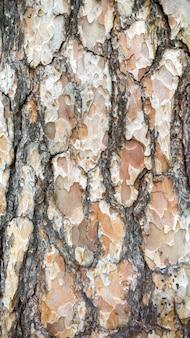 Изображение текстуры макроса коры дерева сосны. крупным планом ствол ели