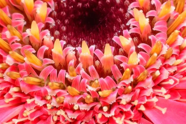 庭のピンクのカーペットの花をマクロ
