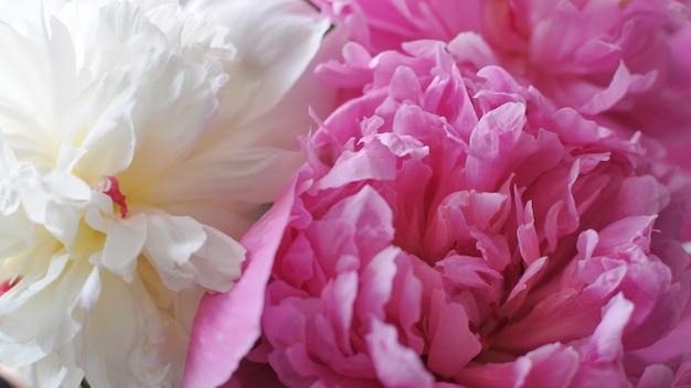 Макро вид сверху красивых розовых и белых пионов букет. цветущие цветы фон