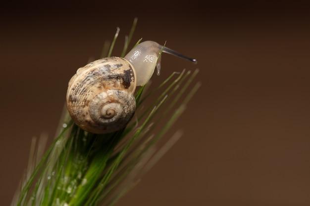 Macro view of snail on wet leaf