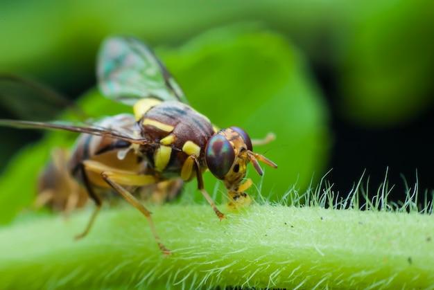 Macro wasp of the garden