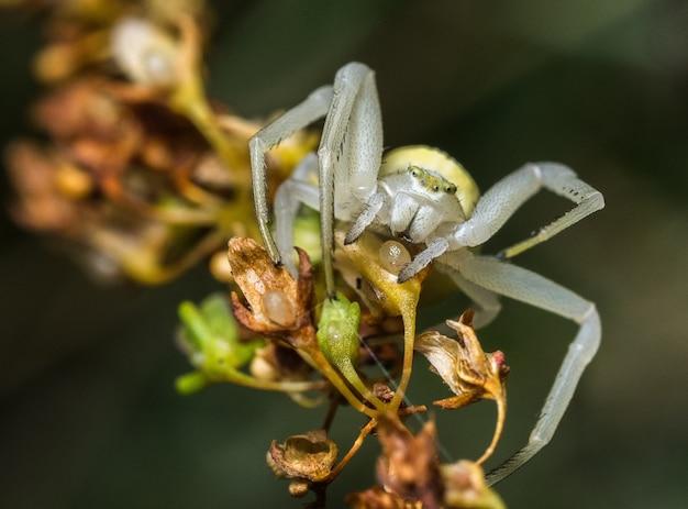 곤충의 매크로 사진 프리미엄 사진