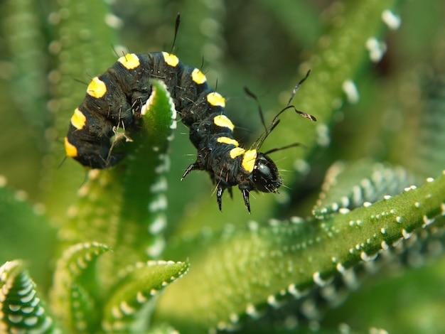 곤충의 매크로 사진