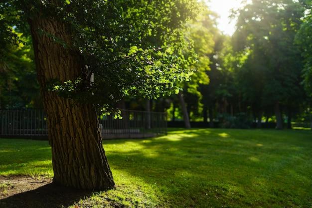 木々、緑の草、太陽フレアのある日の出のマドリードのレティーロ公園。