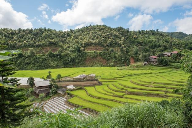 Террасное поле риса на горе с облаками и голубом небе в mae la noi, таиланде.