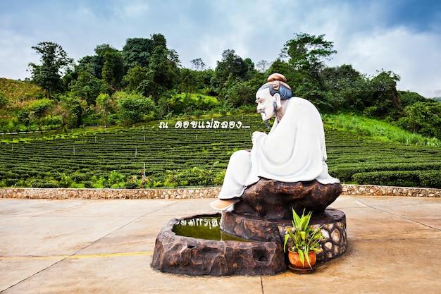 Маэ-салонг, таиланд - 4-ое ноября 2014: чайный центр в мае-салонг, северном таиланде.