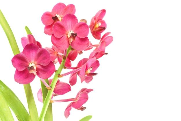 Пурпурная орхидея и зеленый лист, изолированные на белом фоне