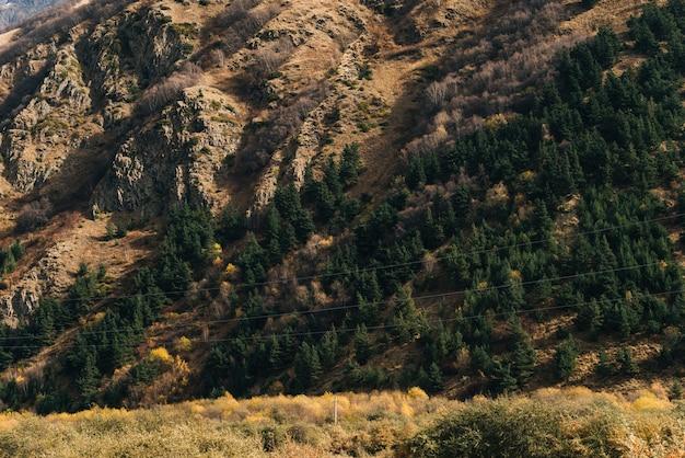 魔法のような魅惑的な自然、雄大な山の斜面は緑の木々に覆われています