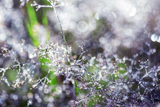 Волшебный лес и капли росы на траве с боке