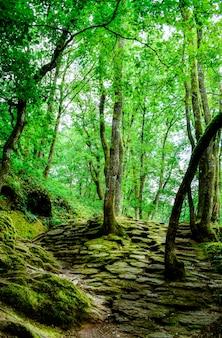 Волшебный лес brocéliande, франция