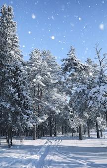 눈 폭풍의 겨울 시즌에 마법의 소나무 숲